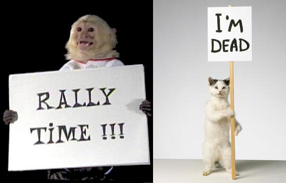 Monkey rally or a dead cat bounce?