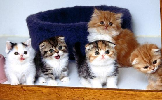 Kittens via I will not stand in your way blog