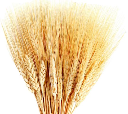 Падение цен на пшеницу приостановилось